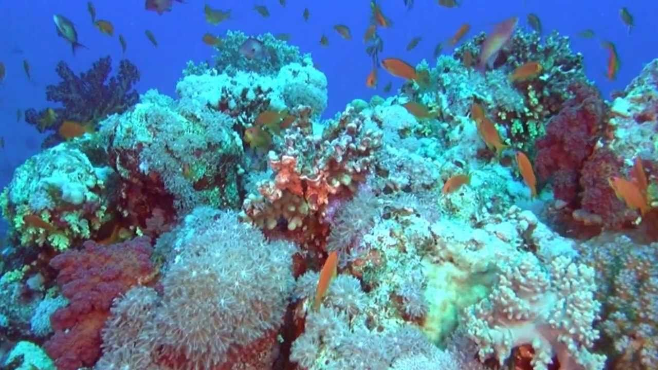 Adventure Coral Reef 3D Trailer Under the Sea of Egypt