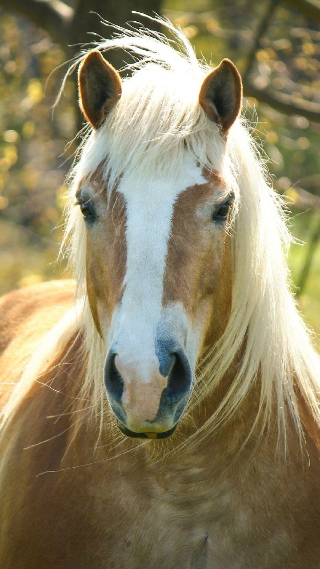 horse, muzzle, mane, forelock