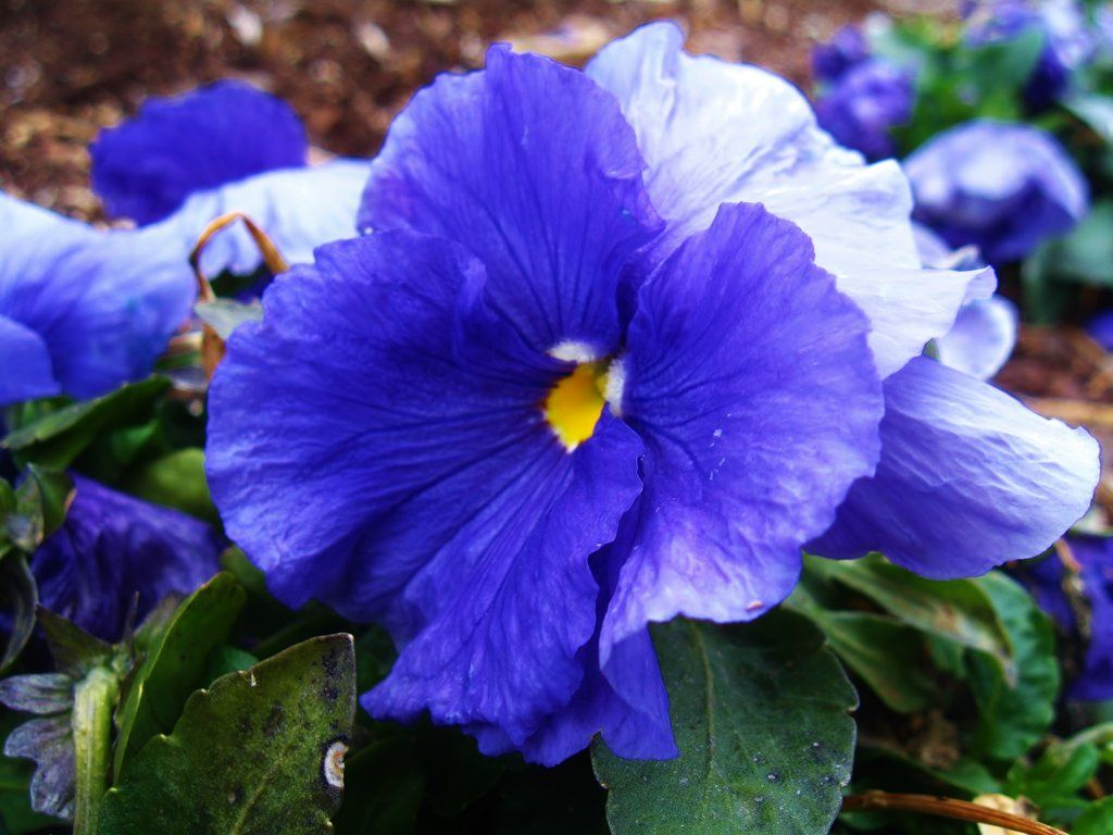 The Winter Flower--1