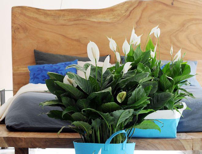 quelle plante pour une chambre id es d coration id es d coration. Black Bedroom Furniture Sets. Home Design Ideas