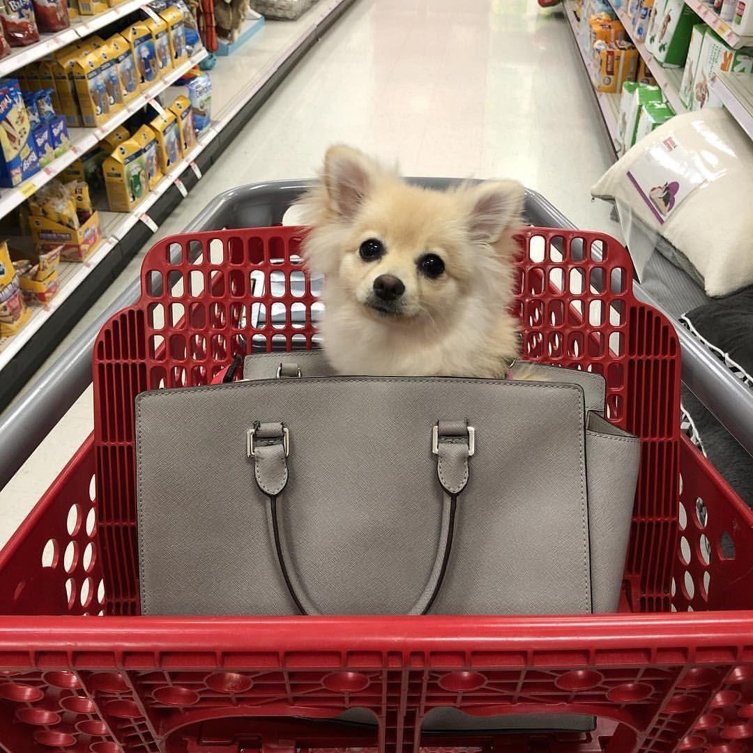 Targetrun Pomeranian Puppy In Purse Shopping Cart Cute Dogs