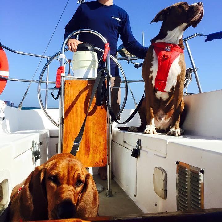 "Brooke Huie on Instagram: ""#westmarine #dogdaysofsummer"""