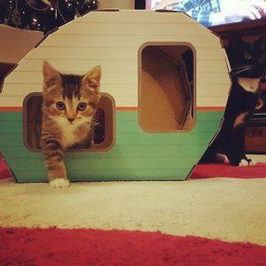 Kitty Camper Cardboard Cat Houses With Ebook Playful Pink Pet Supplies Cardboard Cat House Cat Toys Cats