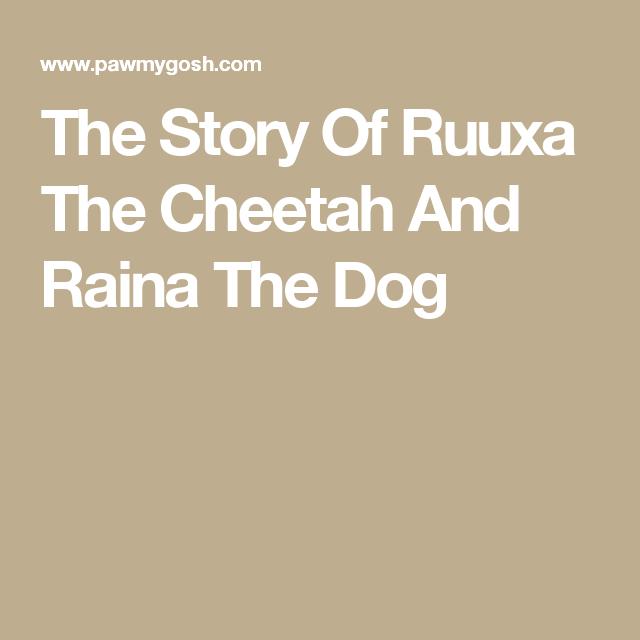 The Story Of Ruuxa The Cheetah And Raina The Dog