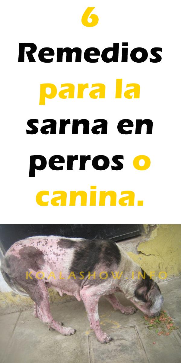 medicamentos caseros para la sarna en perros