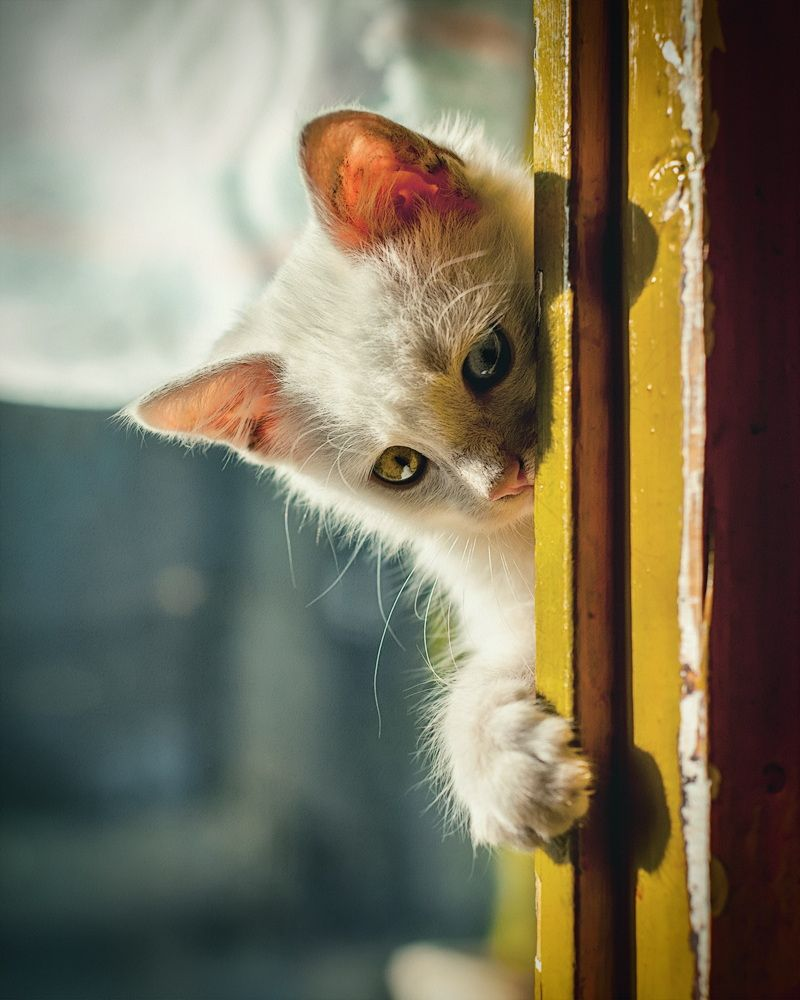 Beua Ii Cute Cats And Dogs Cats Cats And Kittens