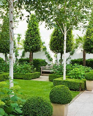 love the combination of boxwood white birch definitely high end french country design awwwwwesome want to add a similar design off the side of our - Garden Design Trees
