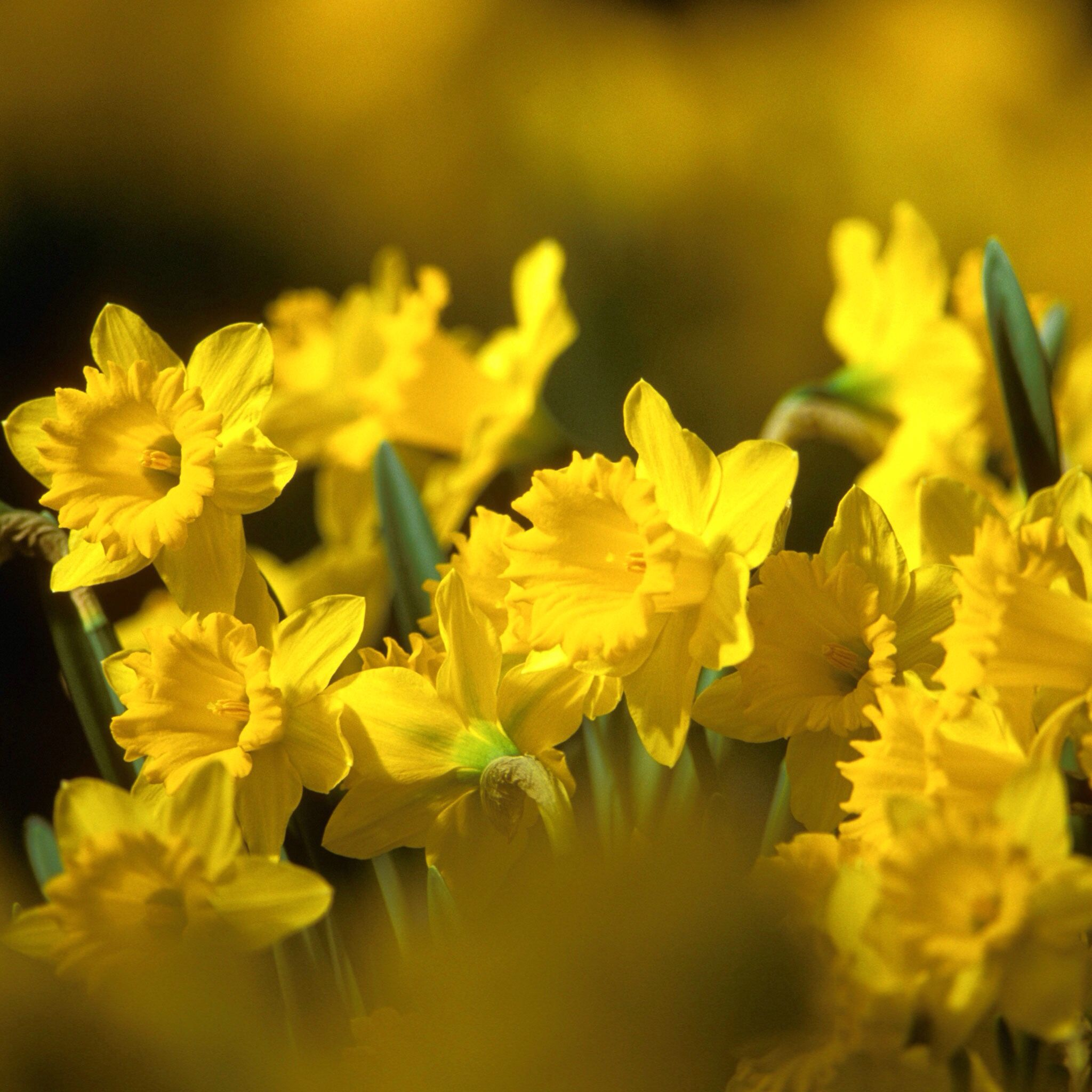 Pin By Dani Ela On Gelb Yellow Pinterest
