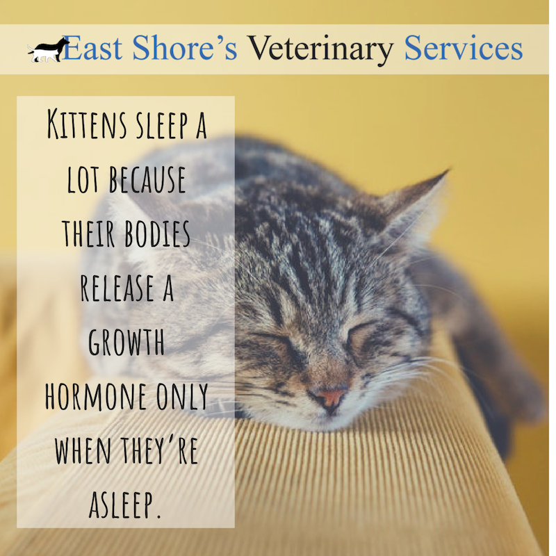 Pin On Eastshore Vet Blog Posts