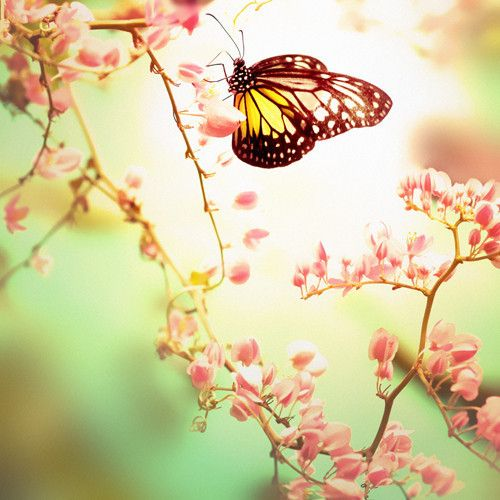 Gallery For > Photography Tumblr Spring | Butterflies ...