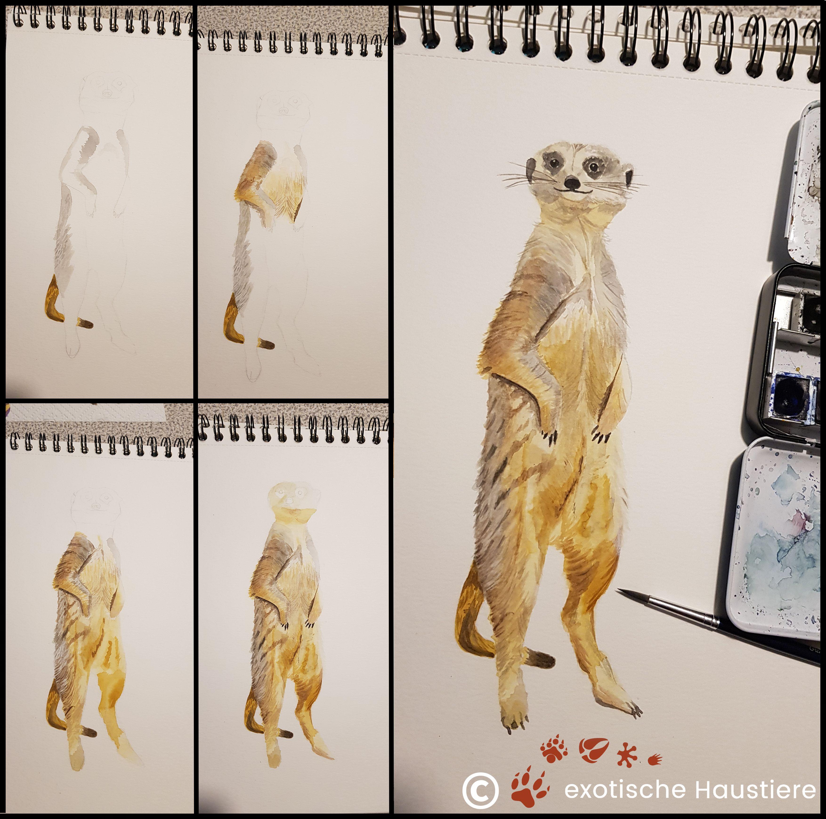Erdmannchen Haltung Exotische Haustiere Haustiere Erdmannchen
