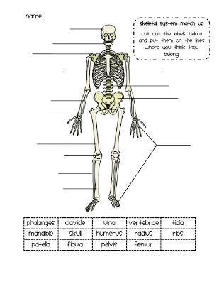 No Bones About It Home Schooling Skeletal System Science