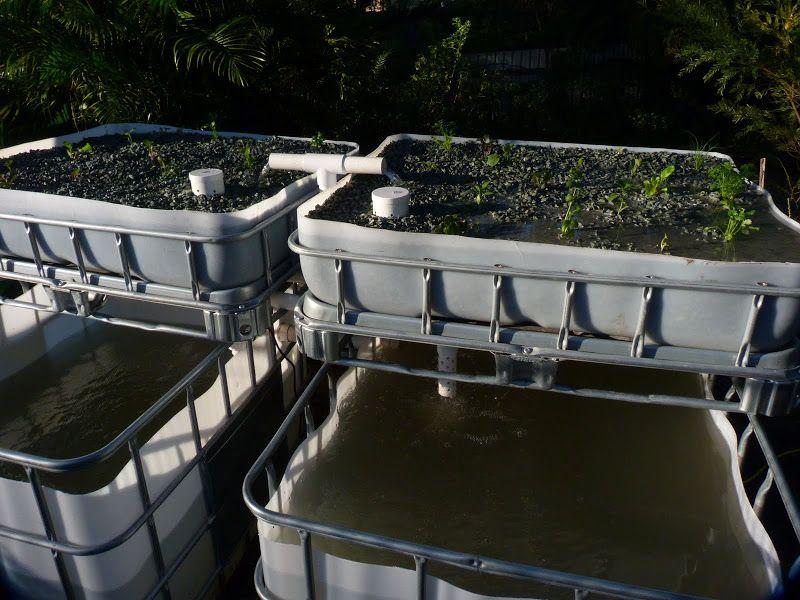 Homestead fish farm  Paint your ibc plastic to help them