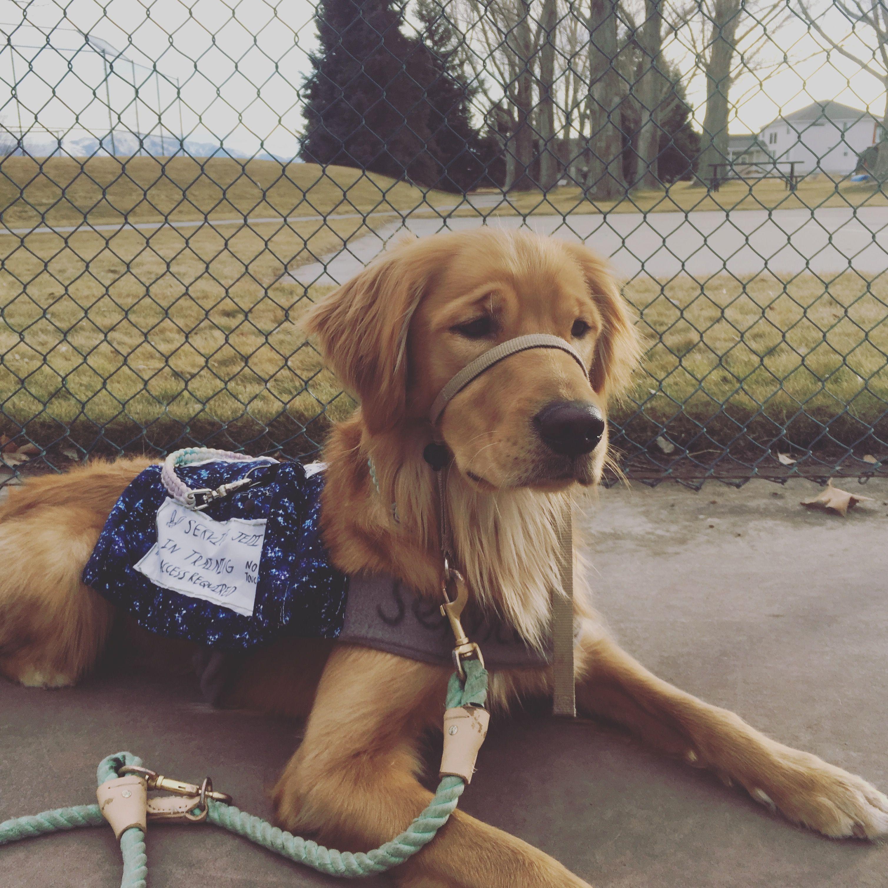 Pin On Service Dog Training