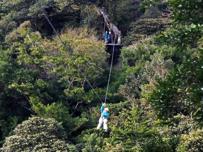 Soar from tree to tree with Original Canopy Tour in Monteverde Costa Rica. Climb up the center of a strangler fig tree to start repel down at the end & Monteverde Original Canopy Zipline Tour #costarica ...