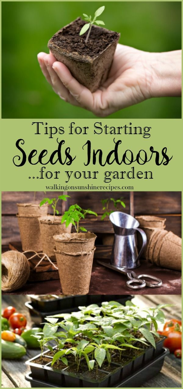 Start Garden Seeds Indoors How to start seeds indoors for the garden gardens garden ideas how to start seeds indoors for a great garden this summer from walking on sunshine workwithnaturefo