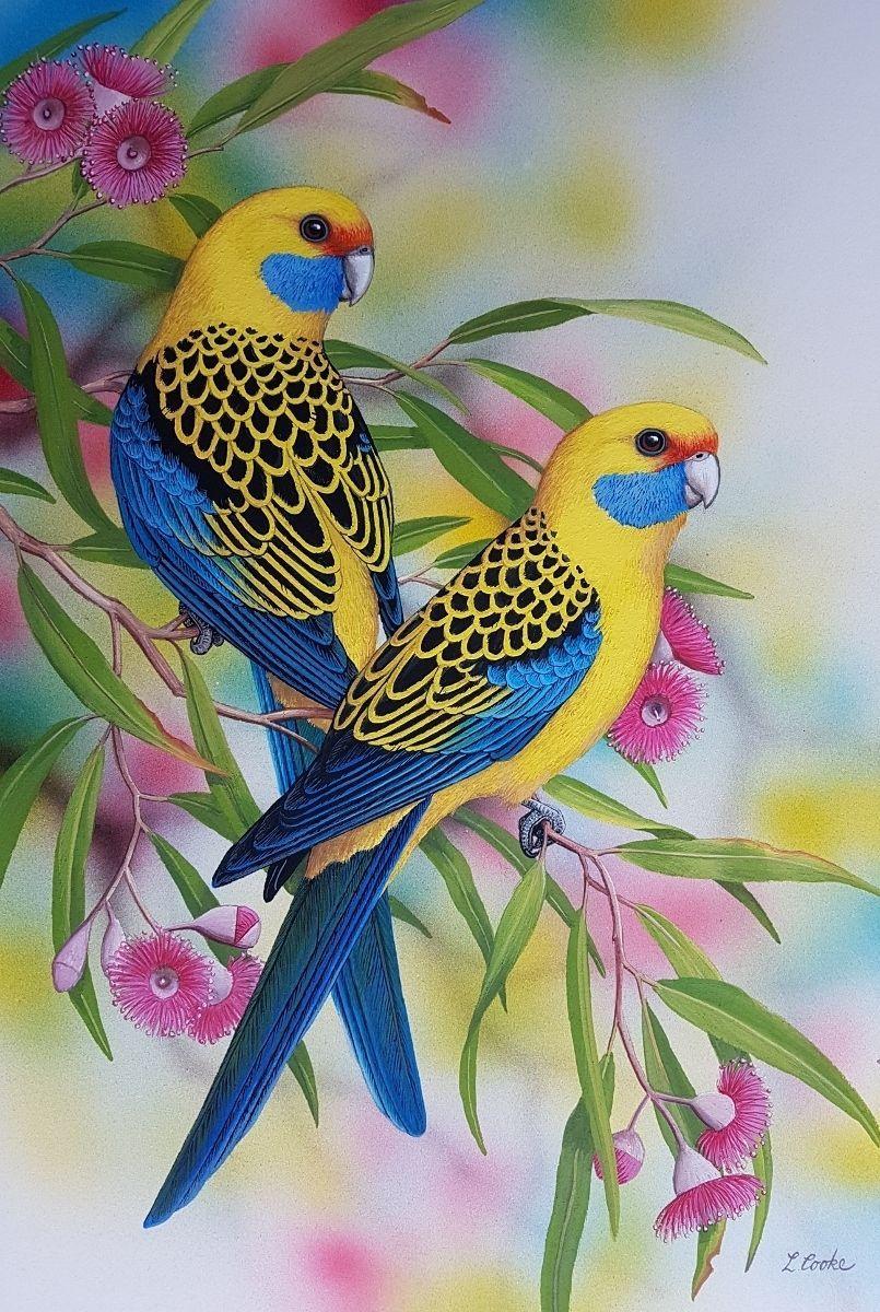 Птицы красочные детские картинки