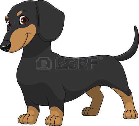 Stock vector bassotti cane bassotto bassotto cani