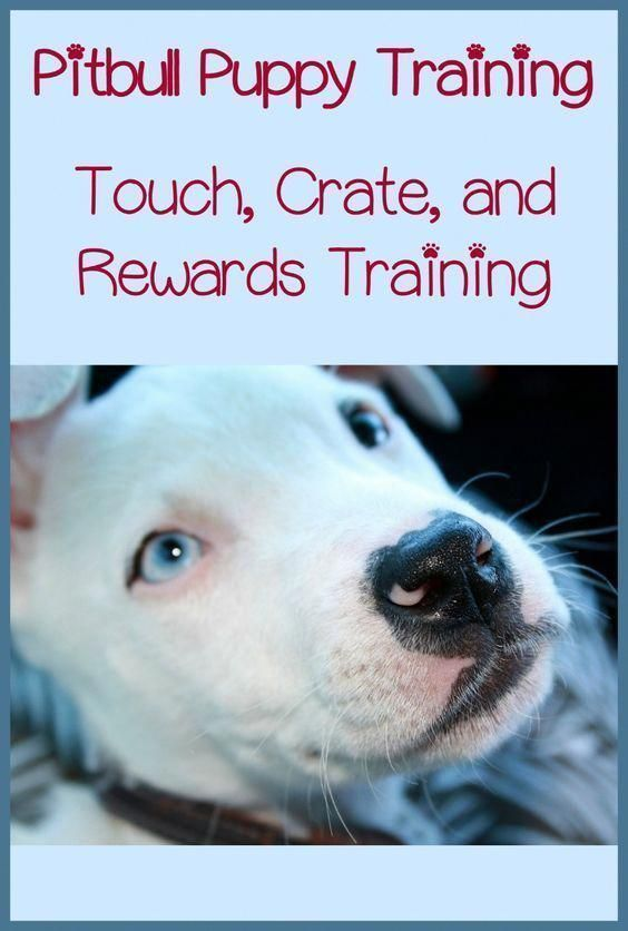 Looking For Some Great Pitbull Puppy Training Tips Look No
