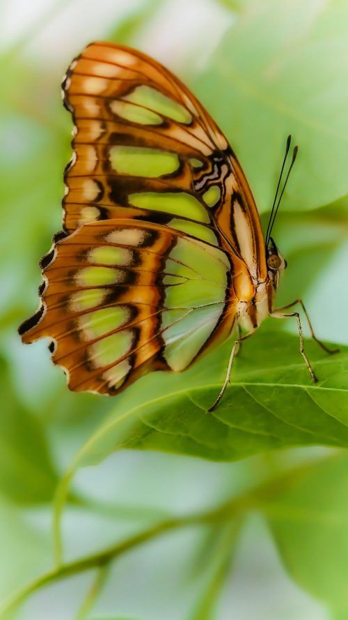 Hd Nature Wallpaper For Samsung Galaxy S6 S7 And S7 Edge With Butterfly In Macro Hd Wallpapers Wallpapers Download High Resolution Wallpapers Hd Nature Wallpapers Nature Wallpaper Samsung Galaxy Wallpaper