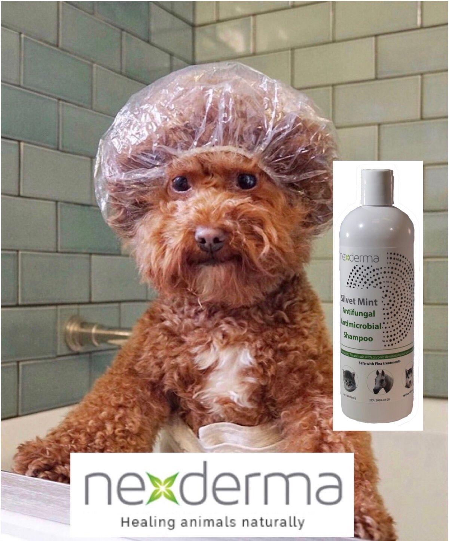 Silvet Mint Antifungal Antimicrobial Shampoo Antifungal