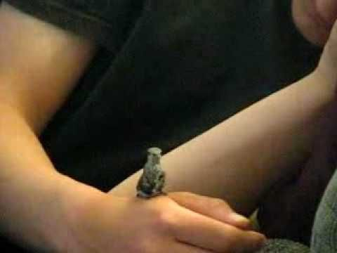 precious video of a rescued baby hummingbird