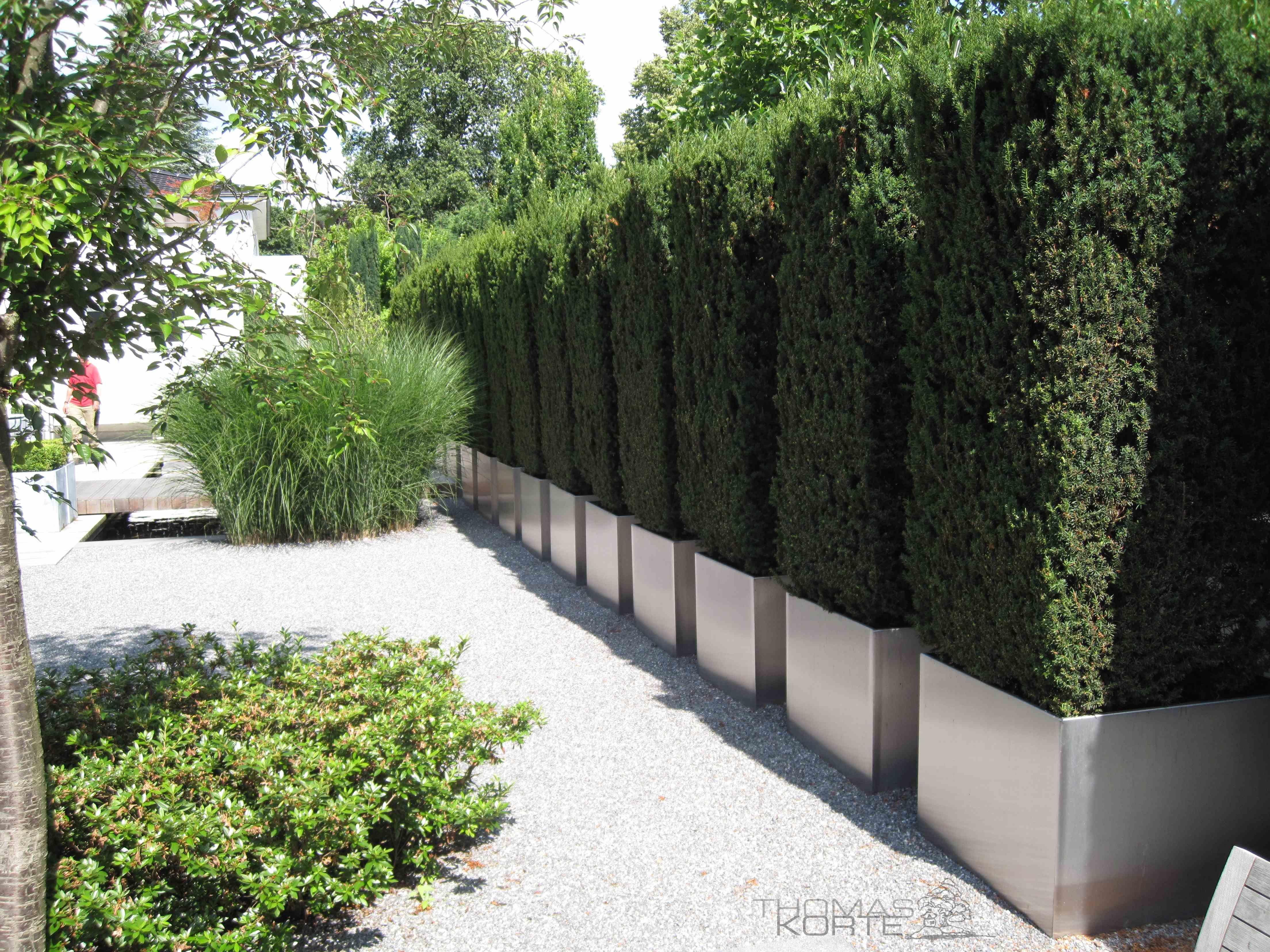 Garten Eibe Taxus Baccata Edelstahl Kubel Pflanzkasten