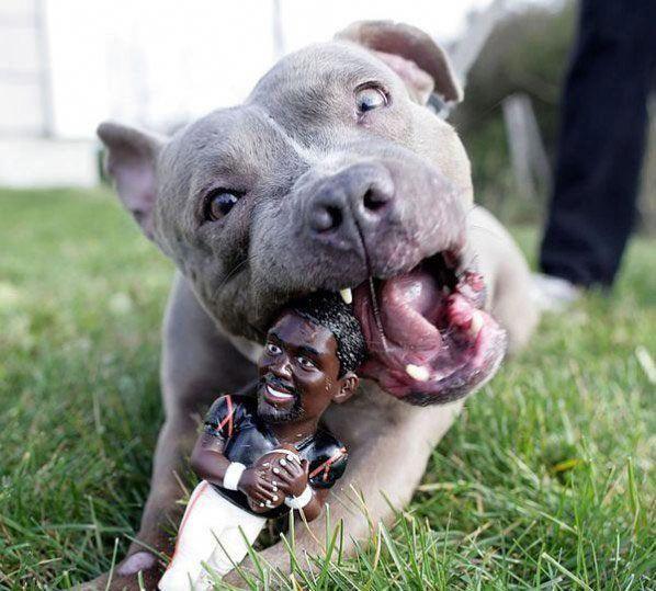 Michael Vick Chew Toy Hell Yes Pitbullmemes Pit Bull Pics
