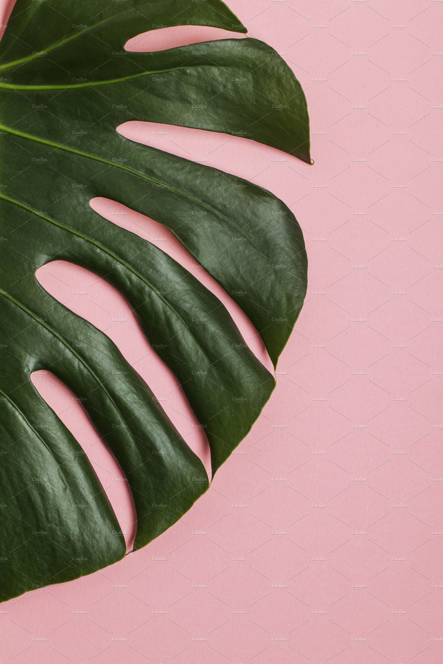 Tropical Leaf On Pastel Pink Tropical Leaves Pink Wallpaper Iphone Tropical Wallpaper