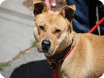 Urgent Bean Atlanta Ga Atlanta Ga Labrador Retriever Mix Meet Bean A Dog For Adoption Kitten Adoption Homeless Pets Pets