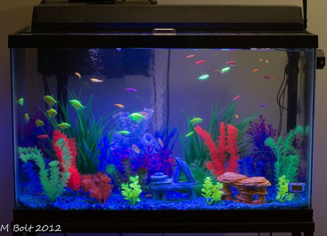 A Pet In Every Classroom How One Nonprofit Is Trying To Make That Dream A Reality Pet Fish Classroom Pets Class Pet