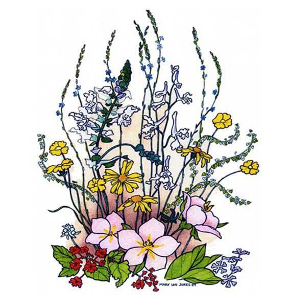 Wildflowers spring flower print texas wildflowers hill country texas spring wildflower prints 8 x 10 drawing in by meermemories 1500 mightylinksfo