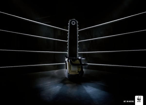 boxing ring 1 eggs assignment pinterest