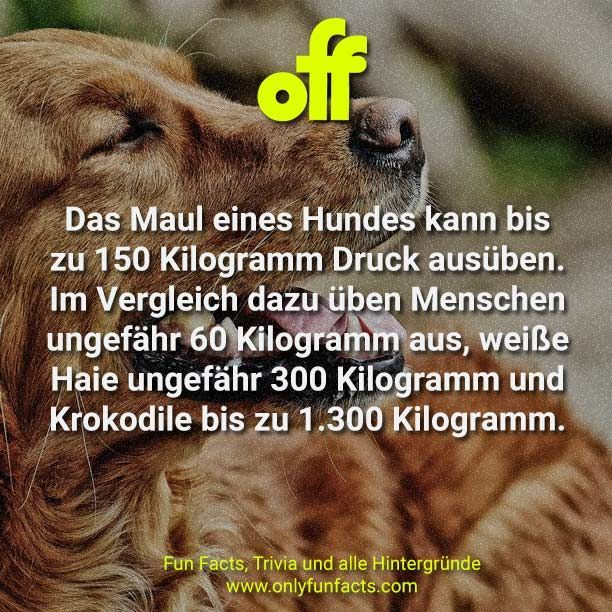 Hunde Fakten