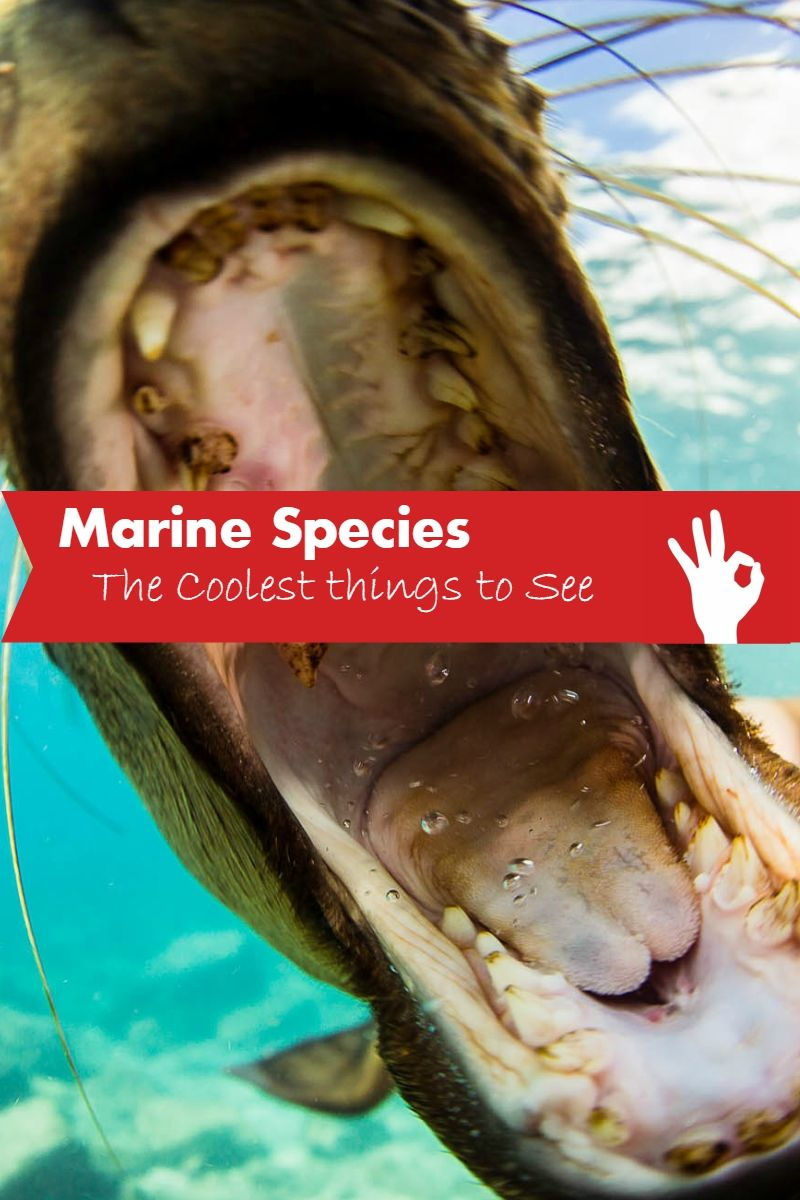Get the lowdown on the  critters you'll find under the waves