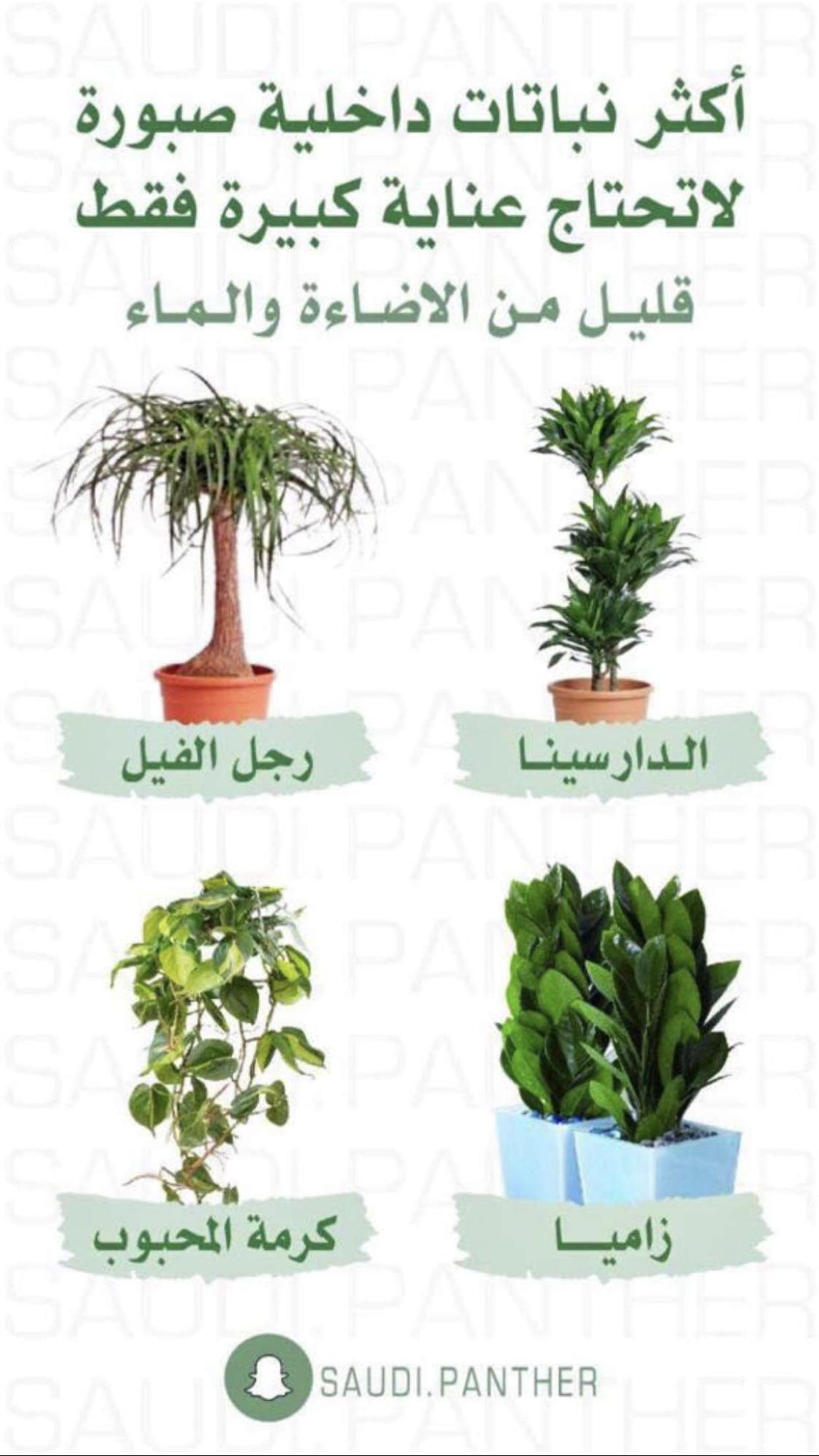 نباتات منزلية لا تحتاج الى عناية كبيرة Outdoor Flower Planters Indoor Plants House Plants Decor