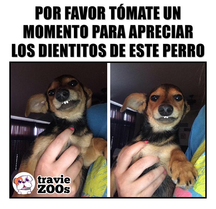 De Nada Otro Beneficio De Seguir A Traviezoos Perros Frases Amor De Perro Memes Divertidos