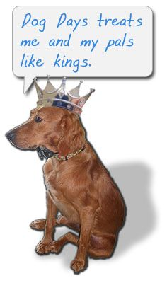 Doggie Daycare Greensboro Nc Dog Daycare Doggy Dog Boarding