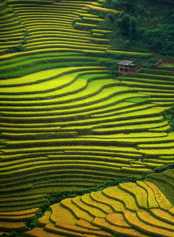 4 special things about Mu Cang Chai   Vietnam tourism