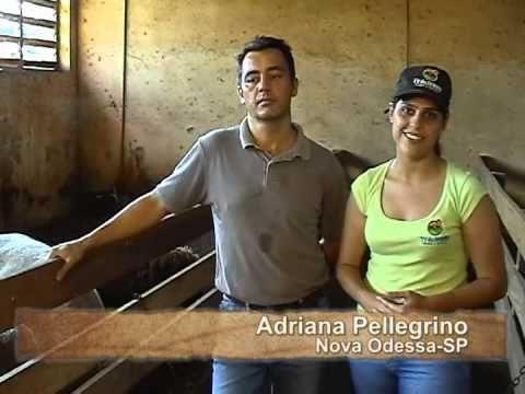 TV do Berro - Alimentação dos cordeiros em confinamento (Programa 8)