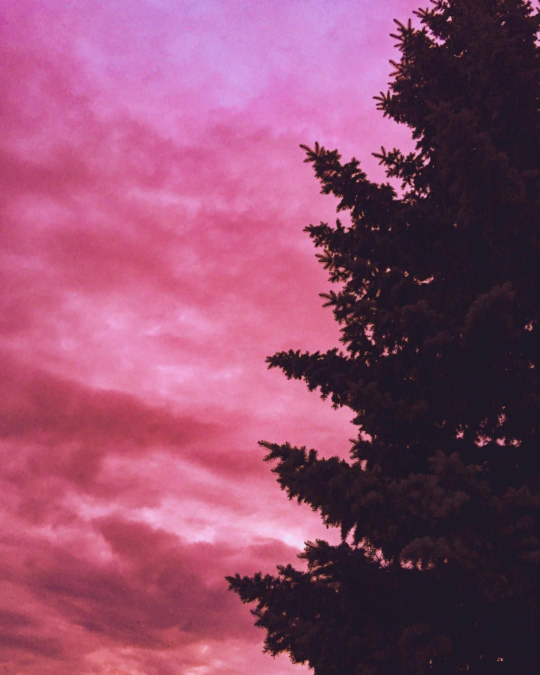 Pink Aesthetic Nature Tree Newyeartree Calm Inspiration