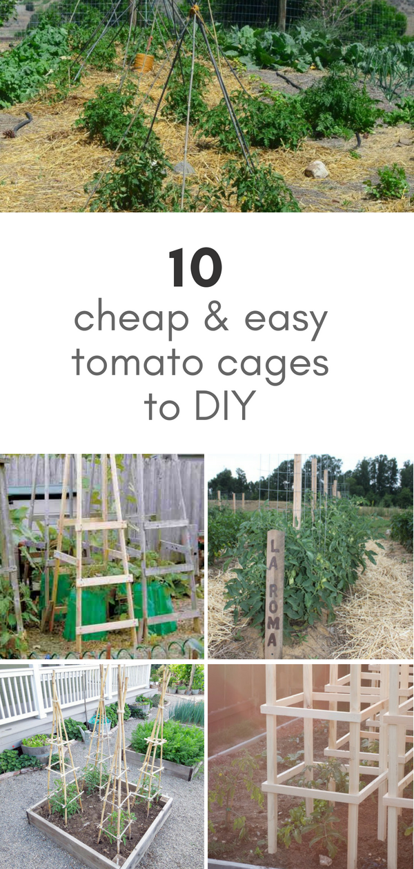 10 ideas for homemade tomato cages cheap easy gardening and rh pinterest com