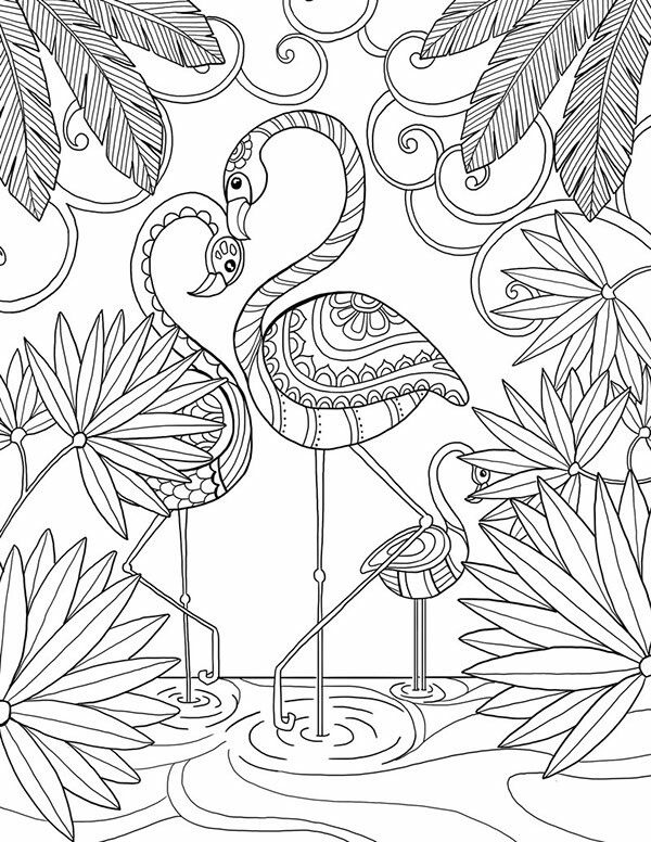 Flamingos Coloring Page Free Printable Adult Coloring Page Adult