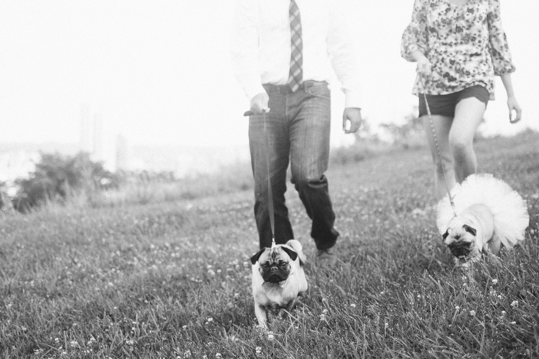 my puggies in our engagement session by the lovely @Mandy Fierens Photography