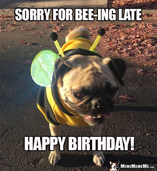 Pug In Bee Costume: Sorry For Bee-ing Late. Happy Birthday