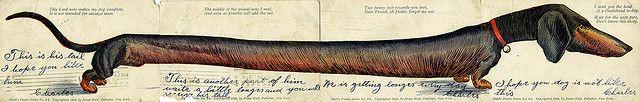 Dachshund, Postcard Set, Huld's Puzzle Series Postcard
