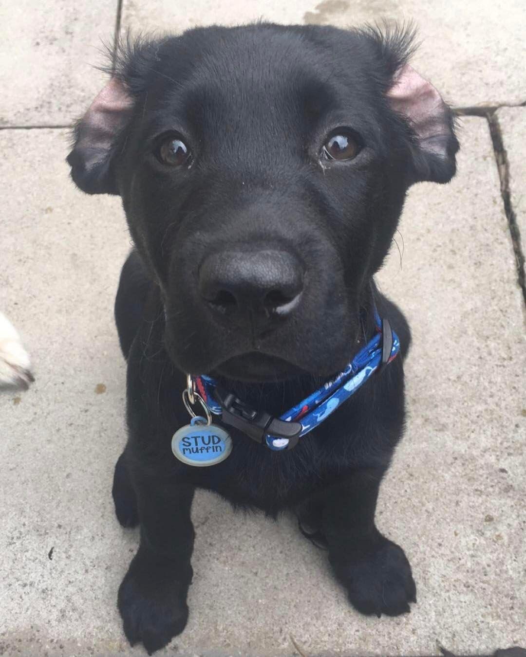 Top Labrador Black Adorable Dog - f60c254e0f0805837172722959307498  Picture_188284  .jpg