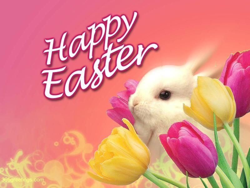 Free Easter Bunny Wallpaper Easter Wishes Happy Easter