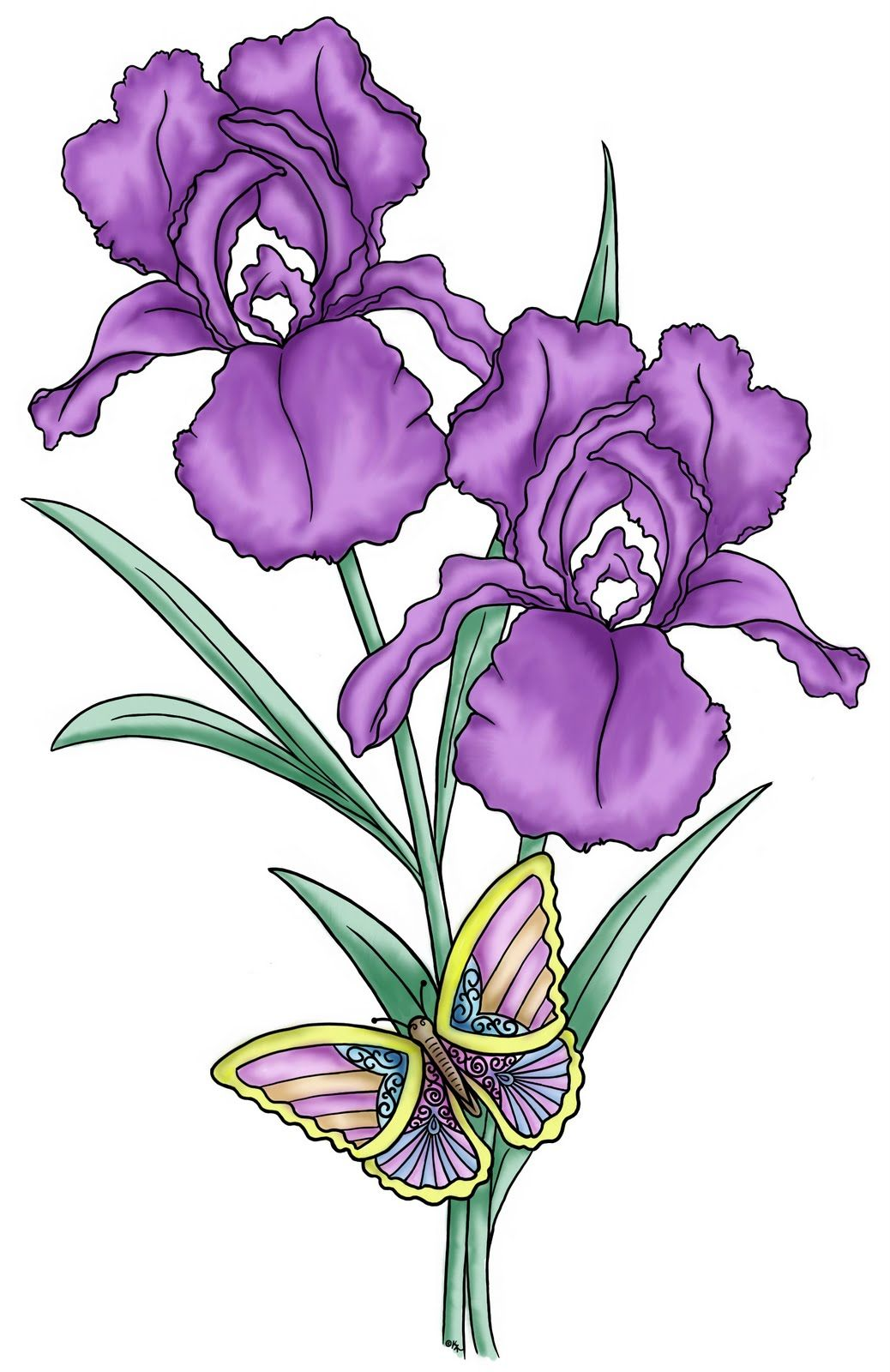 The iris flower is of interest as an example of the relation between the iris flower is of interest as an example of the relation between flowering plants and pollinating insects description from imgadvisor izmirmasajfo