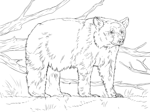Realistic American Black Bear Coloring Page Bear Coloring Pages Polar Bear Coloring Page Animal Coloring Pages